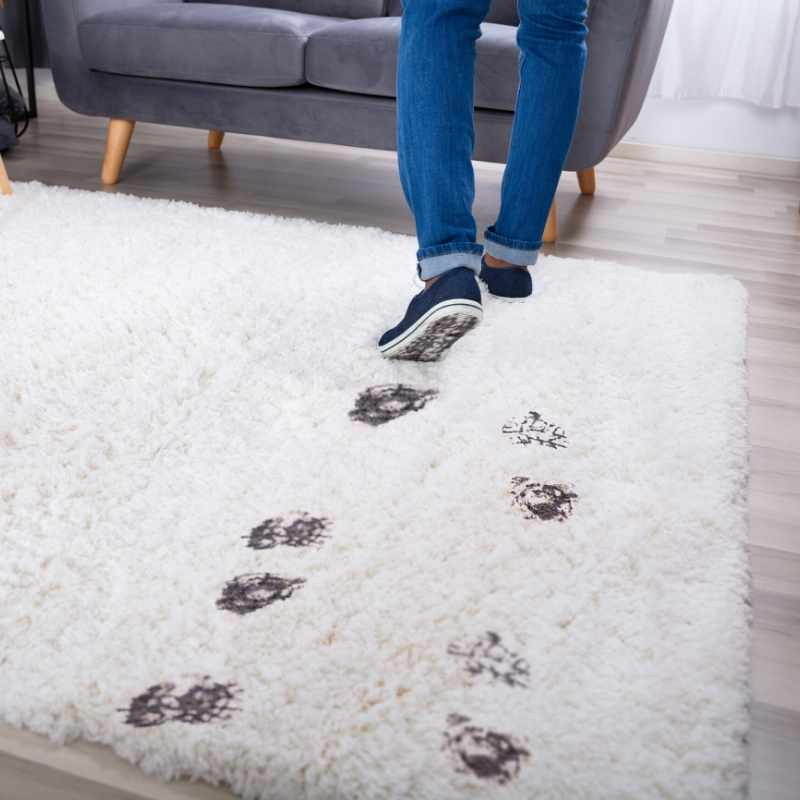carpet cleaners johannesburg